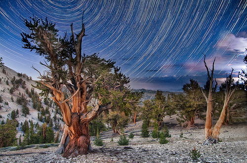 Distant Night Storm in the Patriarch Grove by Harold Davis