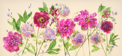 Peonies, Hydrangeas, and Campanulas by Harold Davis